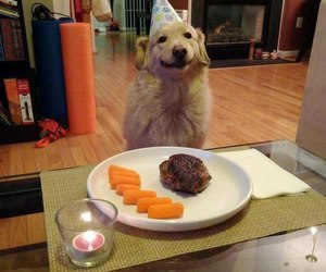 dog, birthday, and happy image