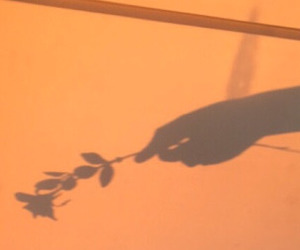 shadow, flowers, and orange image