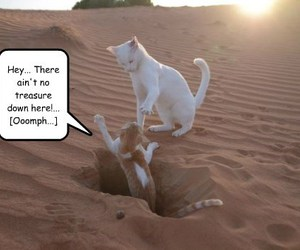 cute animals, cute dogs, and humor image