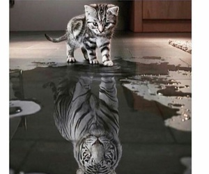 cat, dreams, and reflection image