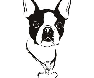 boston terrier and dogs image