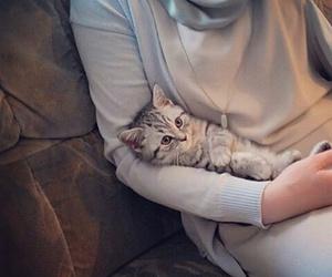 cat and hijab image
