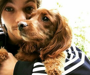 animals, one direction, and dogs image