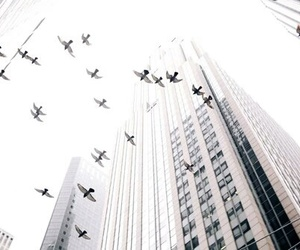 bird, building, and city image