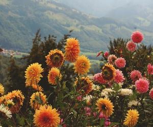 beautiful, flowers, and paisaje image
