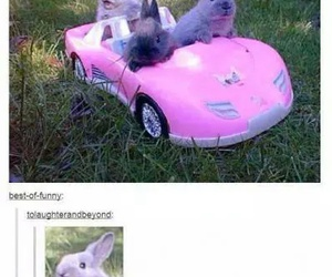 funny, lol, and bunny image