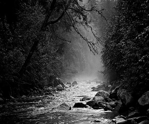 black and white, nature, and river image
