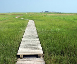 boardwalk, etsy, and grasses image