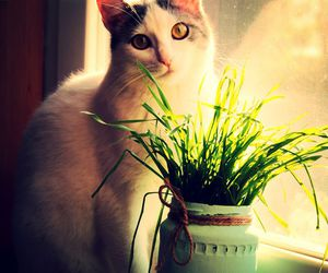 cat, grass, and window image