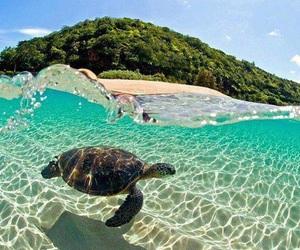 bahamas, beach, and sea image