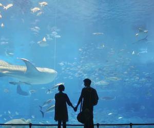 couple, romance, and sea image