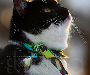 cat, snow, and picasso image
