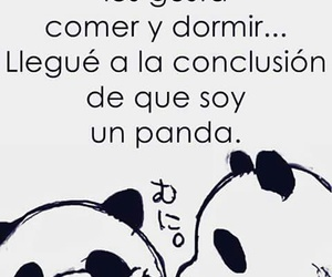 panda and frases image