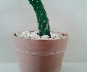 cactus, plants, and love image