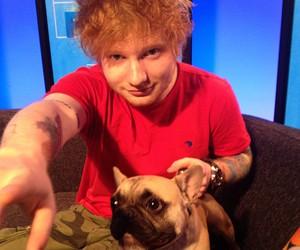 ed sheeran, dog, and ed image