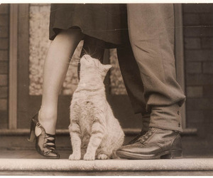 cat, love, and couple image