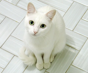 cat, white, and blue image