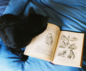 cat, book, and black cat image