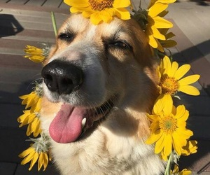 dog, flowers, and instagram image