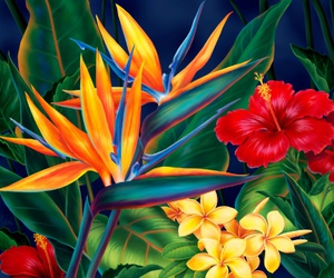 art, hibiscus, and birds of paradise image