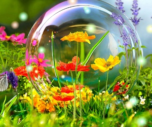 flowers, bubbles, and nature image