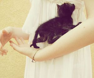 adorable, arms, and black image