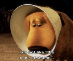 up, cone of shame, and shame image