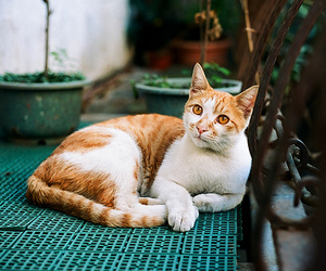 beautiful, cat, and photography image