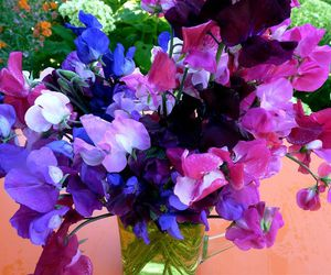 sweet peas and so pea pretty image