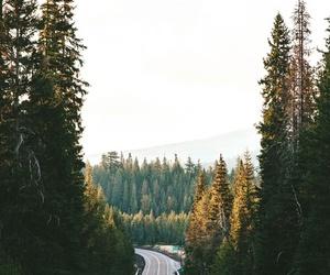 forest and landscape image
