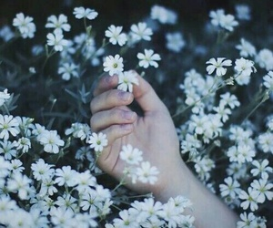 flowers, hand, and white image