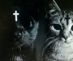 cat and cross image