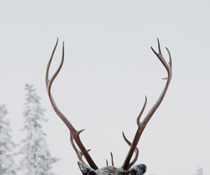 deer, animal, and winter image
