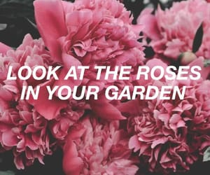 header, roses, and twitter image