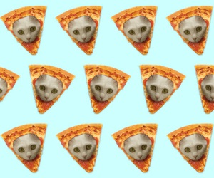 background, nice, and pizza cat image
