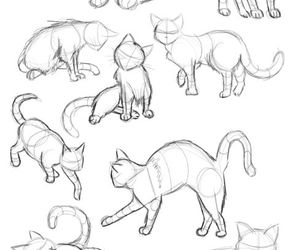 cat, drawing, and draw image