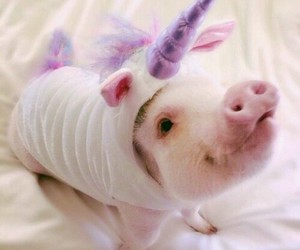pig, unicorn, and animal image