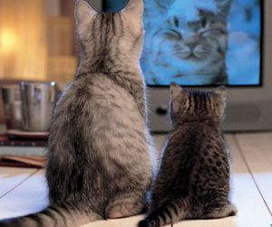 cat, tv, and kitten image