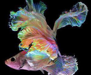 fish and rainbow image