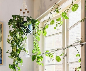 decor, home, and plant image