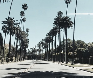 summer, palm trees, and la image
