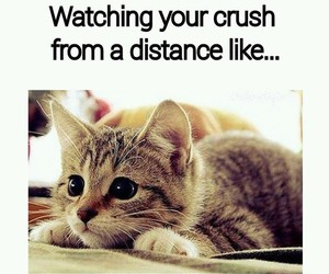 crush, cat, and funny image