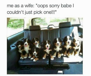 funny, puppy, and cute image