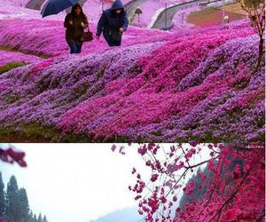 funny, flowers, and japan image