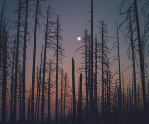 forest, nature, and moon image