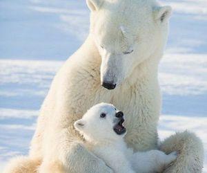 bear, animals, and baby image