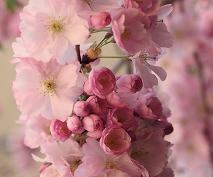 flowers and wallpaper image