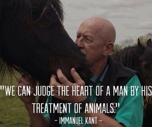 animals, heart, and horse image