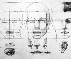 anatomy, face, and sketch image