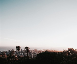 summer, city, and palm trees image